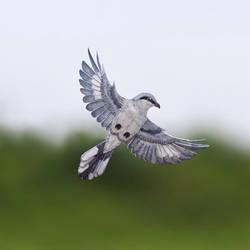 Great Grey Shrike - Paper cut birds by NVillustration