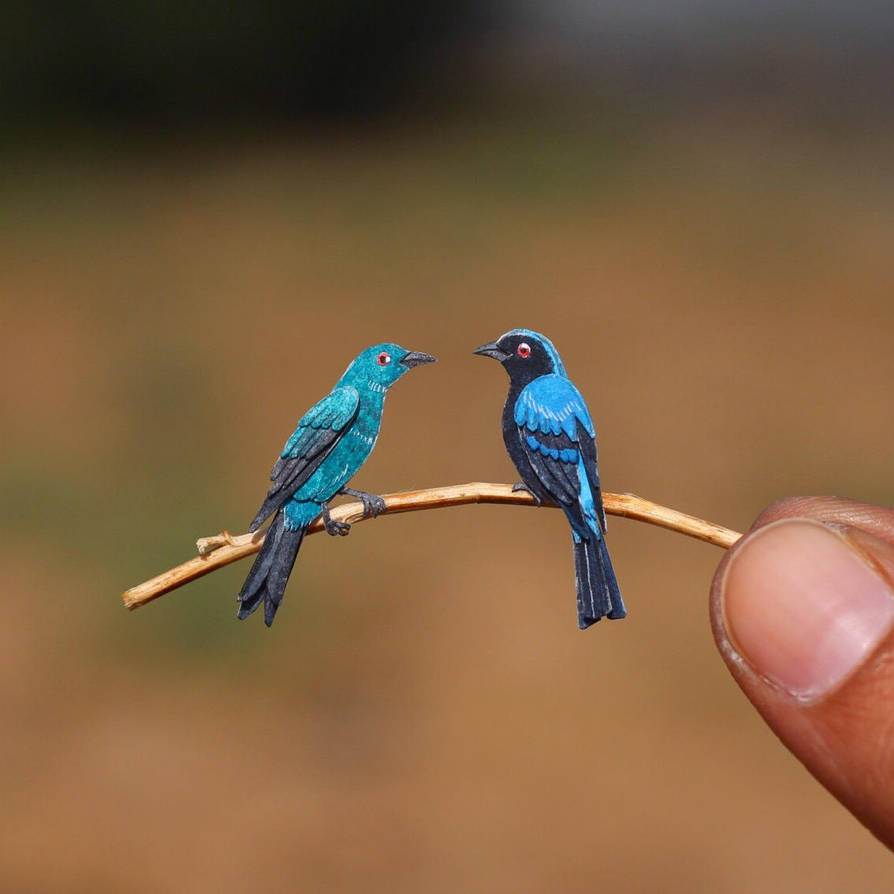 Asian Fairy-bluebird - Paper cut birds by NVillustration