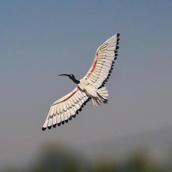 Black-headed Ibis - Paper cut birds by NVillustration