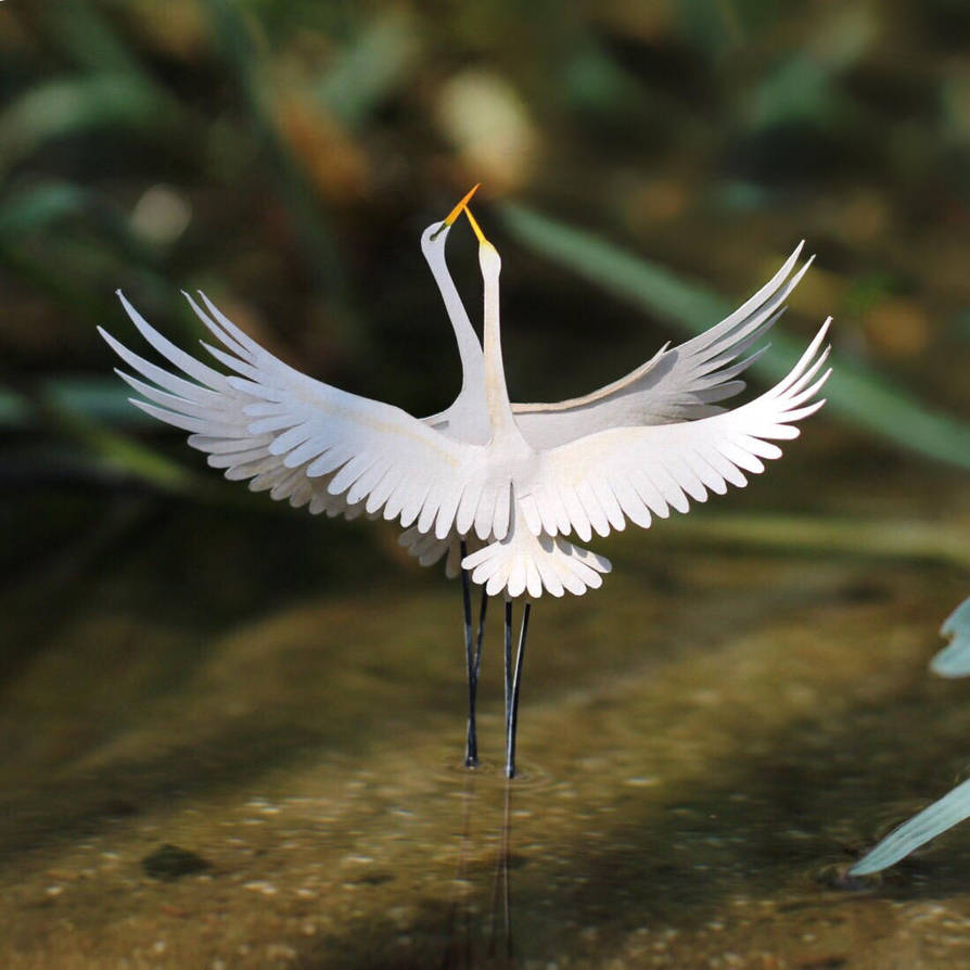 Great Egret - Paper cut birds by NVillustration