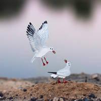 Black-headed Gull  - Paper cut birds by NVillustration