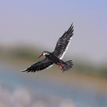 Inca Tern - Paper cut birds by NVillustration