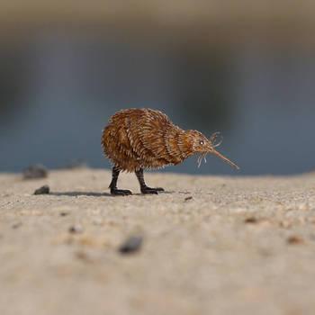 Kiwi - Paper cut birds by NVillustration