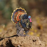 Wild Turkey - Paper cut birds by NVillustration