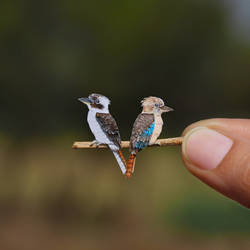 Laughing Kookaburra and Blue-winged Kookaburra by NVillustration