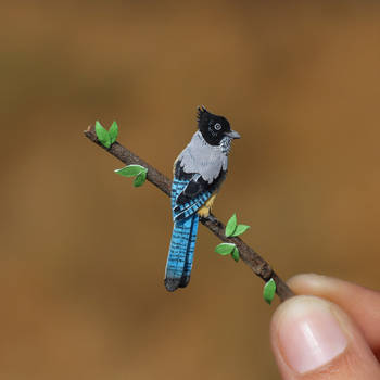 Black-headed Jay - Paper cut birds by NVillustration