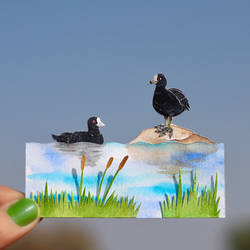 Eurasian Coots - Paper cut birds by NVillustration