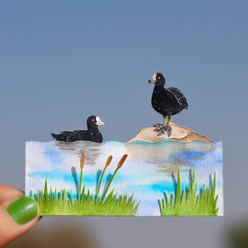 Eurasian Coots - Paper cut birds by NVillustration