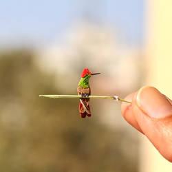 Ruby Topaz Hummingbird- Paper cut birds by NVillustration