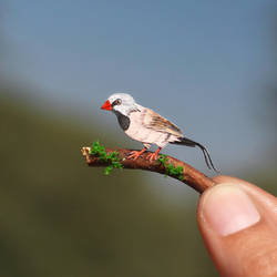 Long-tailed Finch - Paper cut birds by NVillustration