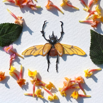 Rhinoceros Beetles  - Paper cut art by NVillustration