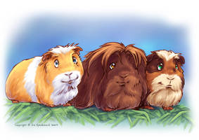 Guinea Pigs I by Fany001