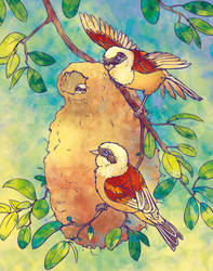 Penduline Tit Family by Fany001