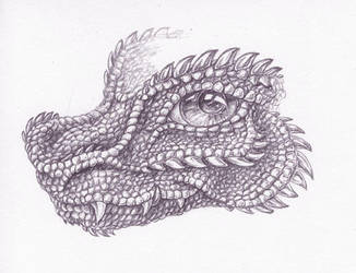 The Pebble Dragon by Fany001