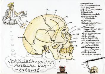 Schaedelknochen - Ansicht von lateral by Todeskuenstlerin