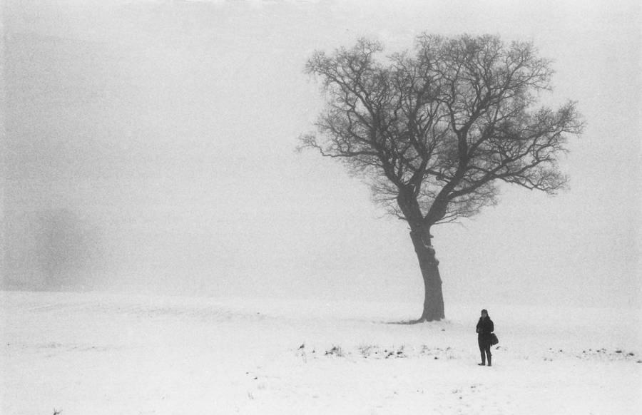 Snow and Fog III by Nigel-Kell