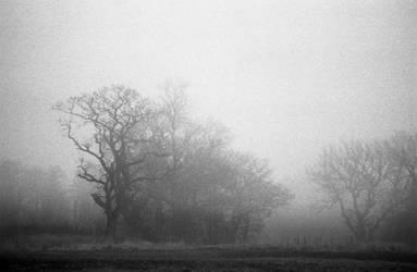 Trees. by Nigel-Kell