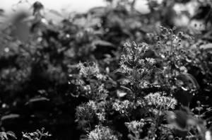 Hedge by Nigel-Kell
