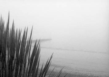 Fog in the morning by Nigel-Kell