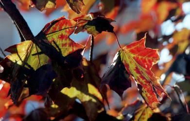Turning leaves by Nigel-Kell
