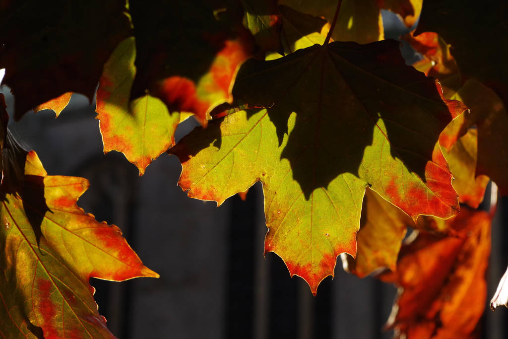 Changing leaves by Nigel-Kell
