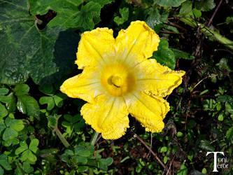 Una flor amarilla by ToniTeror