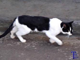 Gato negro y blanco 2 by ToniTeror