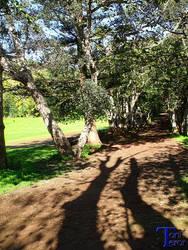 Sombras de unos troncos by ToniTeror