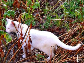 Gato blanco 3 by ToniTeror