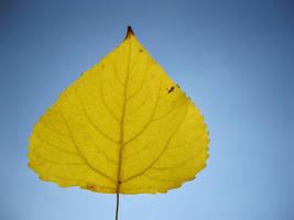 Autumn by MikeZK