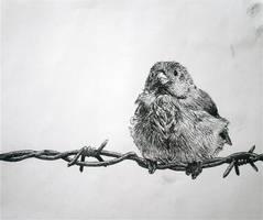 Bird on Wire by darlingnikki12