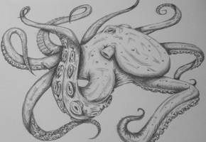 Octopus by RebelInABox