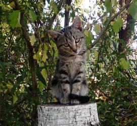 Kitty by Konoko88