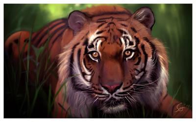 Panthera tigris altaica by gfxglobe
