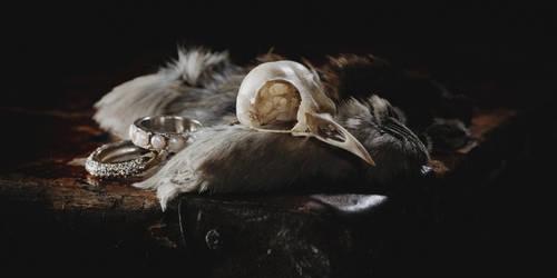 Still Bird by Sc0orp