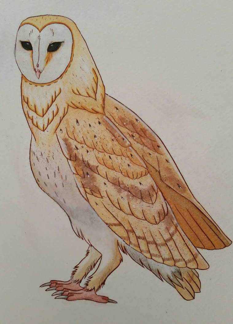 Barn Owl Tattoo Design By Harbinger Of Rage On Deviantart