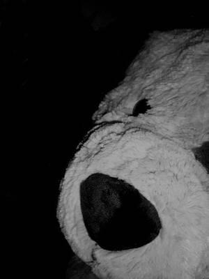 Teddy Bear by jeanuska