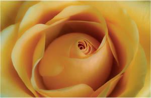 Rosebud by aquapell
