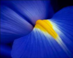 Iris 1.1 by aquapell