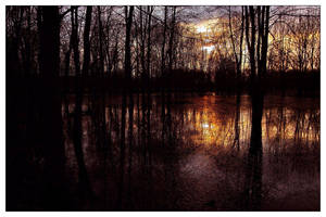 Gilded Marsh by aquapell