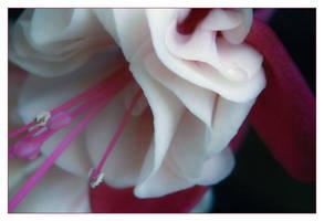 Raspberry Kiss by aquapell