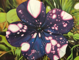 Night Sky Petunia by HillaryWhiteRabbit