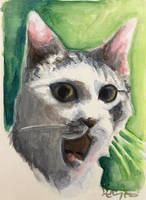 OMG Cat by HillaryWhiteRabbit