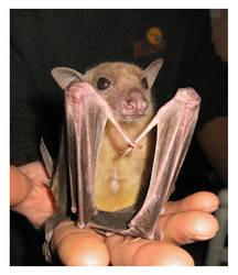 Bat by leocbrito