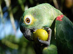 Eating fruits by leocbrito