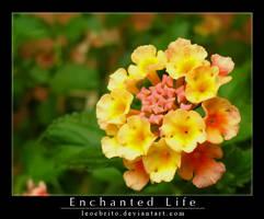 Enchanted Life by leocbrito