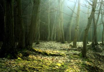 morning in the woods II by SvitakovaEva