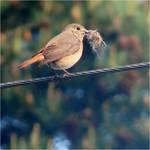 nesting by SvitakovaEva
