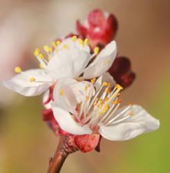 spring flowers 3 by SvitakovaEva