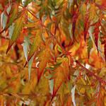 autumn wallpaper 2 by SvitakovaEva